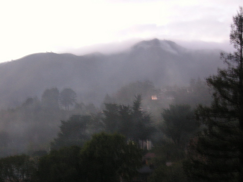 Mt. Tam in the fog